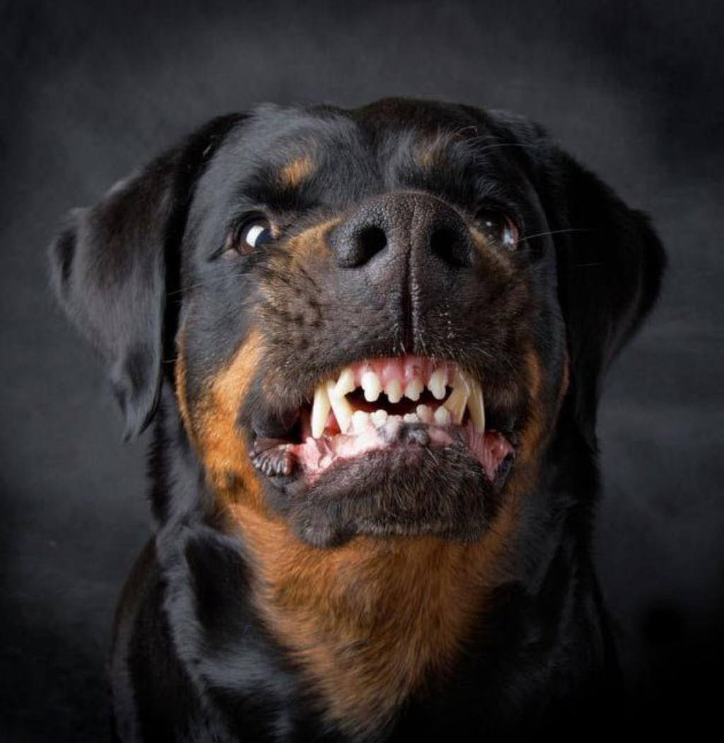 Most Dangerous And Aggressive Dog Breeds In The World
