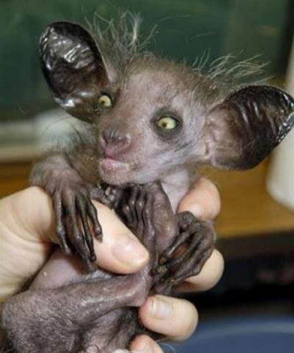 The Ugliest Animals On The Earth