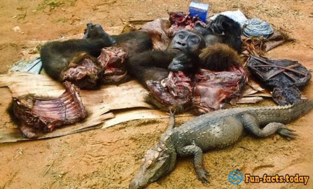 Barbecue Of Hippo And Other Exotic Meat