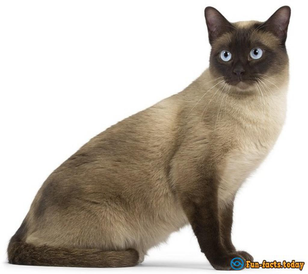 Top 20 The Most Popular Breeds Of Cats.