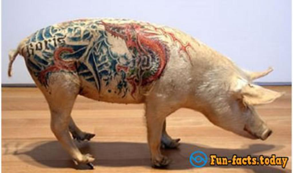 Shocking Photoes Of Tattooed Animals