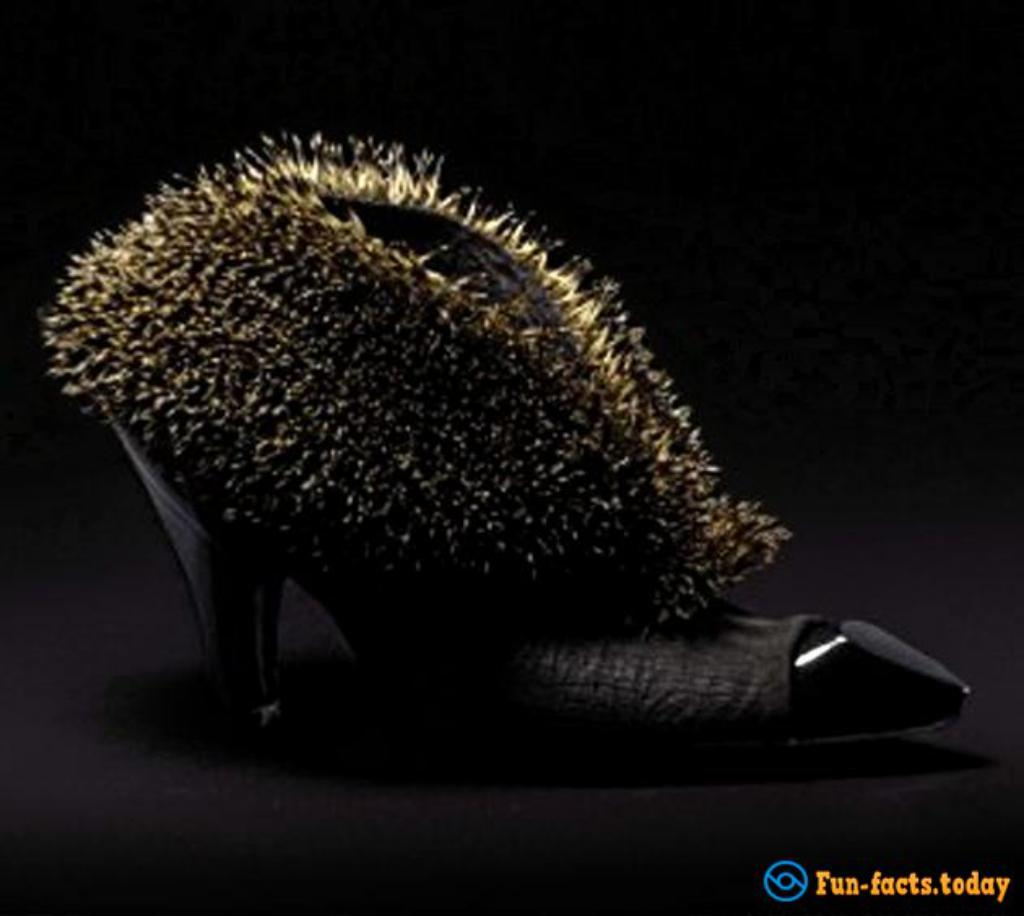 Lady GaGa Choice: Shoes From Animal Carcasses
