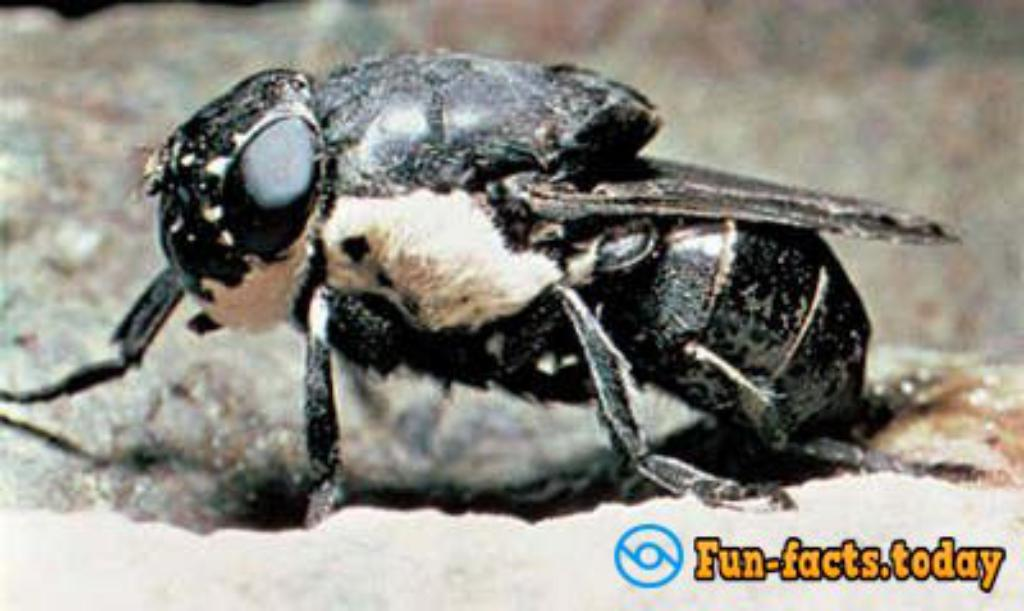 Top 10 Most Dangerous Insect In The World (Video)