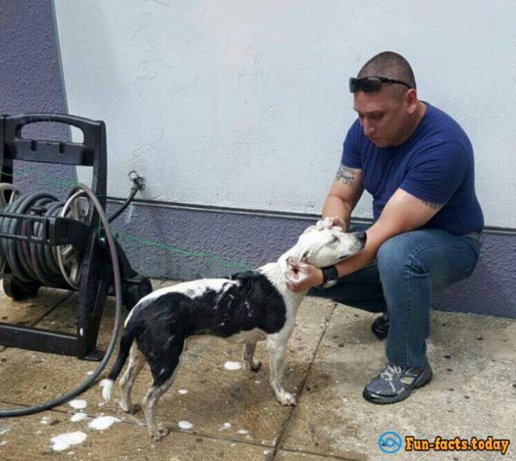 In Puerto Rico, Homeless Dog Found Job At The Police Station