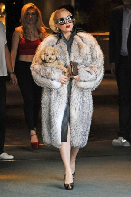 Top 11 The Most Expensive Fur In The World