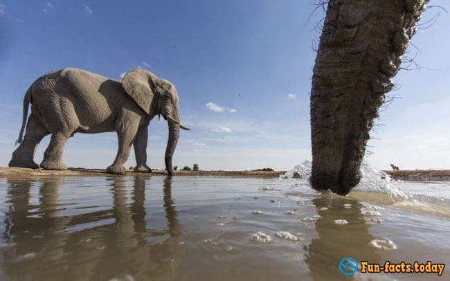 The Craziest Facts About Elephants