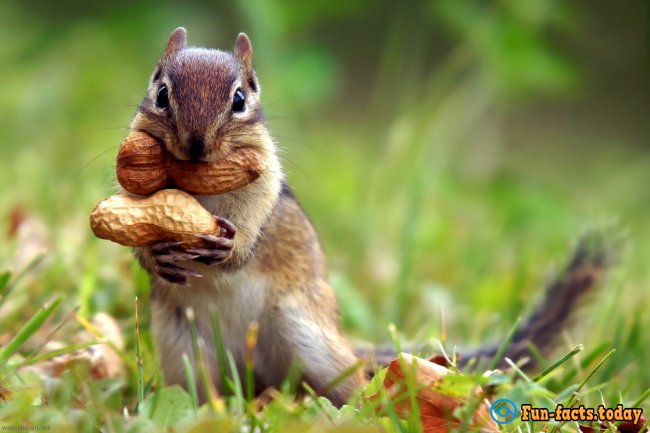 The Craziest Facts About Squirrels