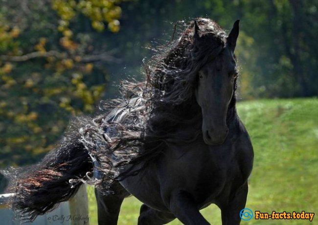 Friedrich - The Most Beautiful Horse In The World