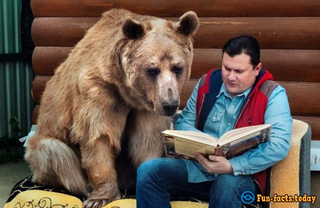 Bear Stepa And His Unusual Life With Russian Family - Video