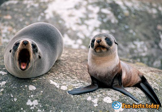 The Cutest Animals Of The World