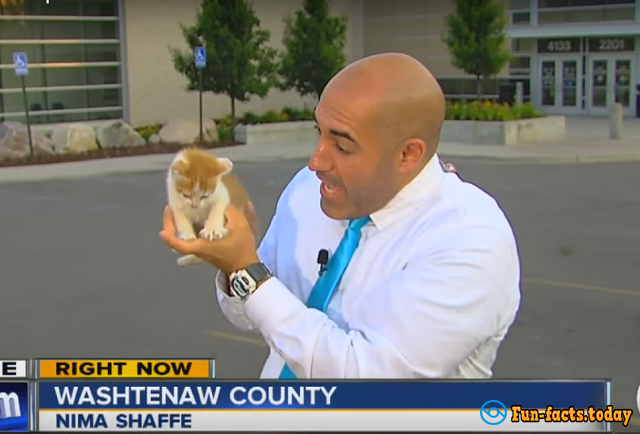 Kitten Interrupted a Live Broadcast on American TV
