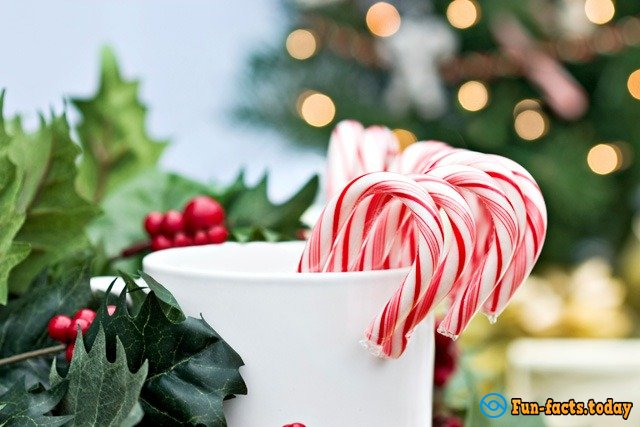 Fun Facts About Candy Cane