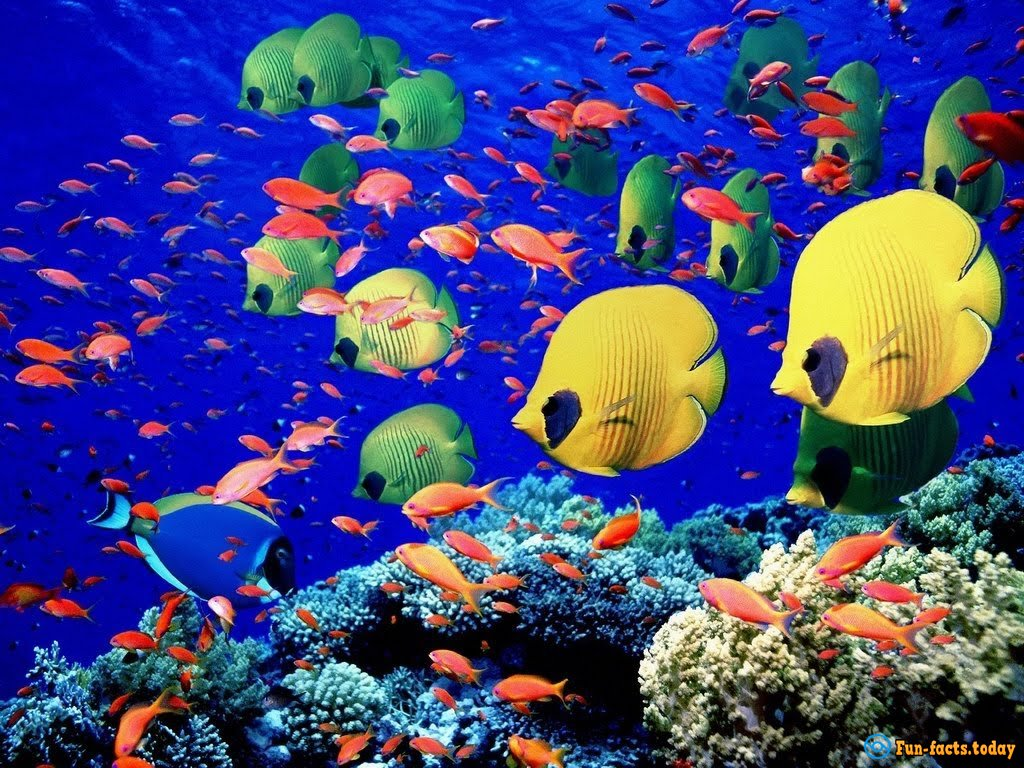 Fascinating facts about tropical fish for Information about fish