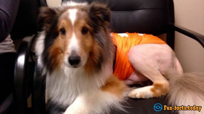 Trainee of Vet Clinic Rescued Collie In One Minute Before Euthanasia!