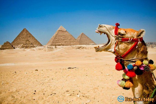 The Craziest Facts About Camels