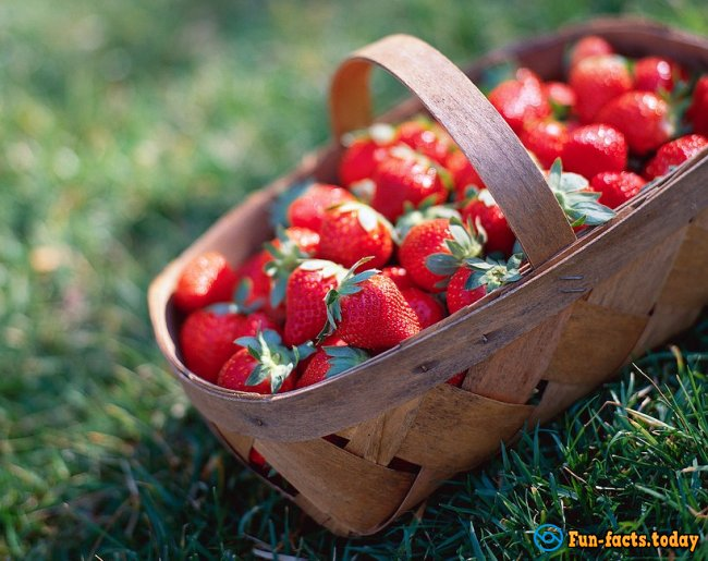 The Most Amazing Facts About Strawberries