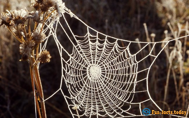The Craziest Facts About Spiders
