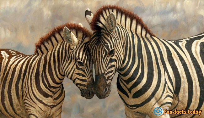 Amazing Facts About Zebras
