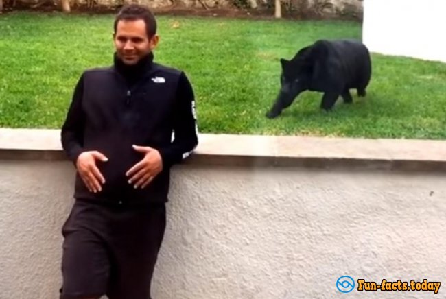 The Panther Crept Up to the Man to ... KISS him! Video