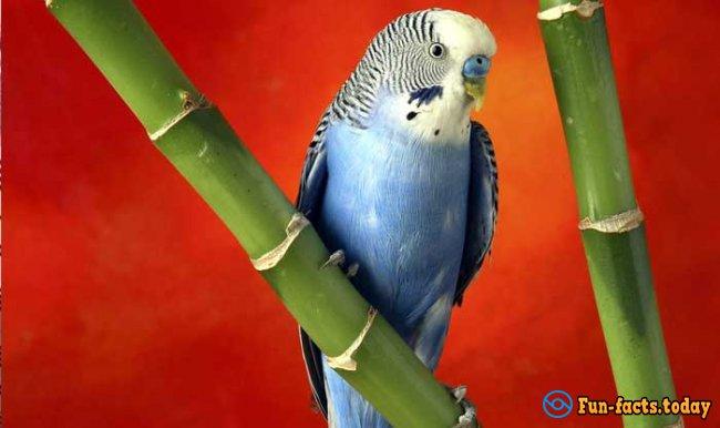 Talking Bird Activates Siri on the Iphone