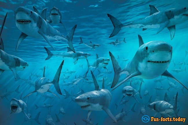 The Craziest Facts About Sharks