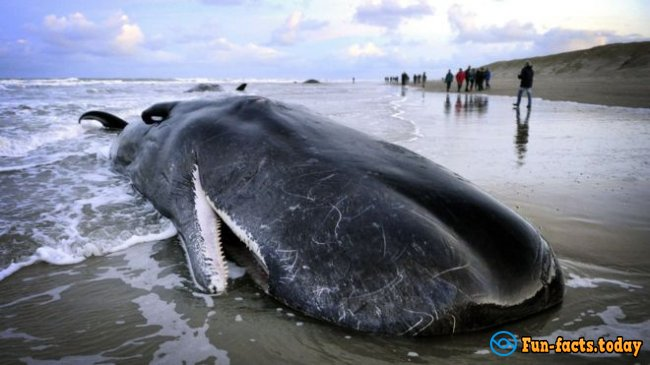 The Craziest Facts About Whales