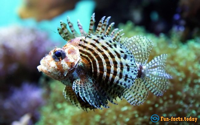 Fascinating Facts About Tropical Fish