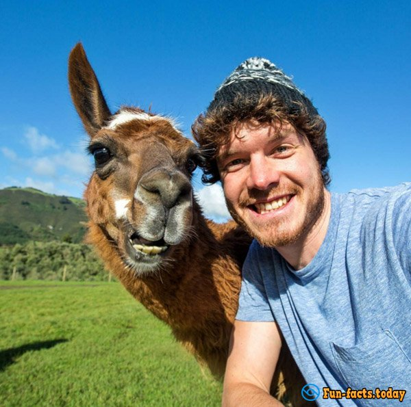 Funny Guy Makes Selfie with Animals All around the World