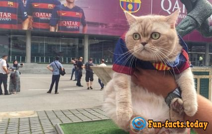 Cat's joy: Fluffy Tourist from Russia Conquers the World