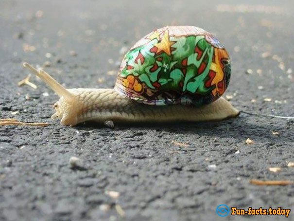 Artists Have Found An Extraordinary Way To Save Snails From Road Hazards