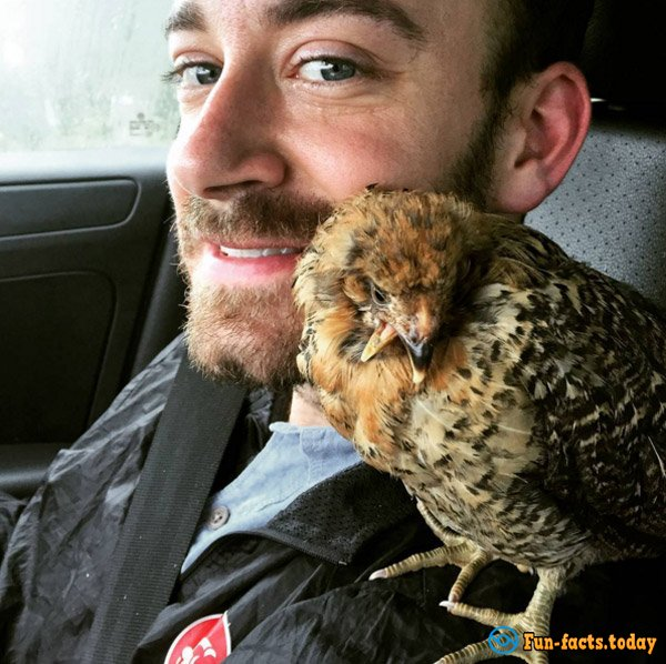 Man Saved Chicken from Certain Death and Now Traveling With Him around the World