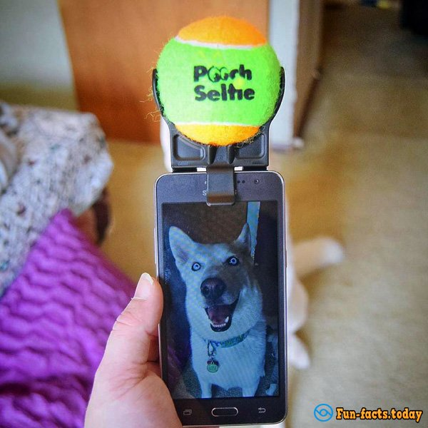 Device For Dog Selfies: Ingenious And Easy
