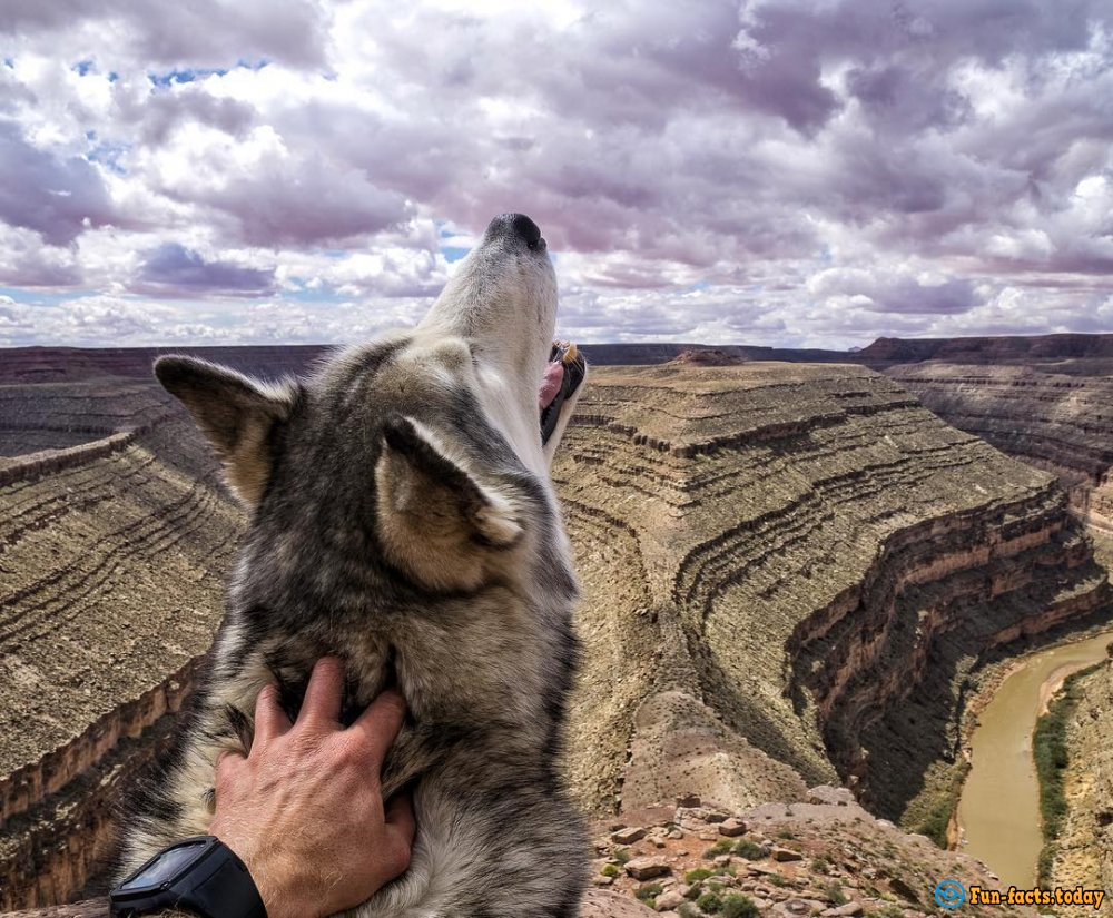 Pets Travelers and Their Amazing Adventures around the World