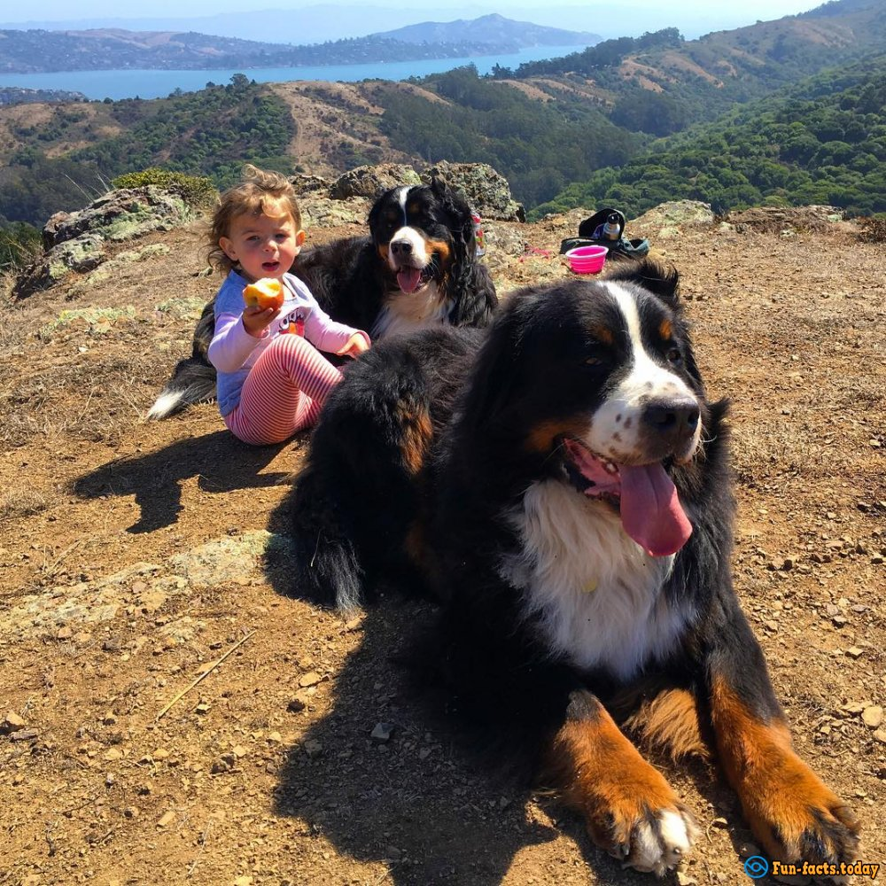 Incredible Friendship of Kids and Huge Dogs Touched the Entire Internet