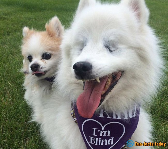 History of Incredible Friendship: Puppy Took Into Care the Blind Dog