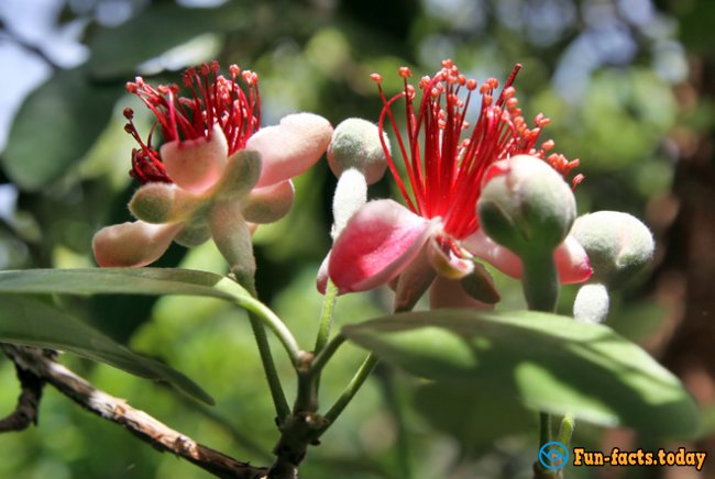 Natural Wonder: Flowers of Bananas, Pineapples and Other Exotic Plants