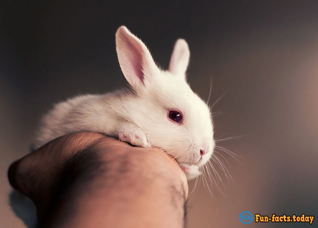 Touching Photo Session of Newborn Rabbit