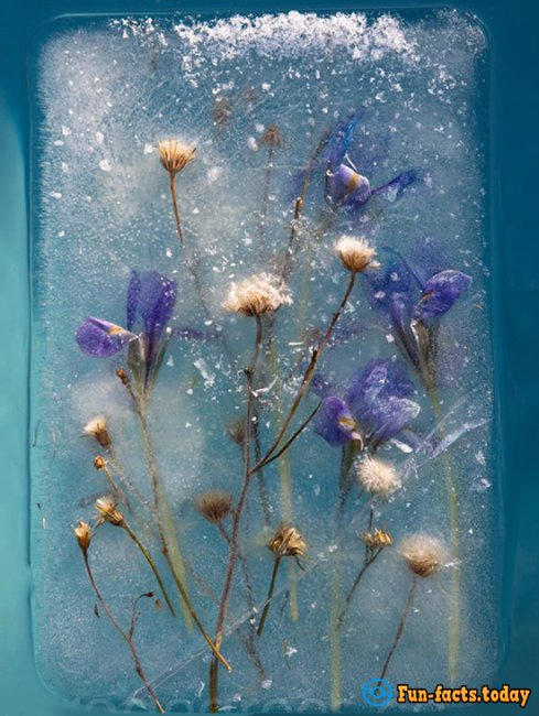 Flowers and Ice: Original Ice Bouquets