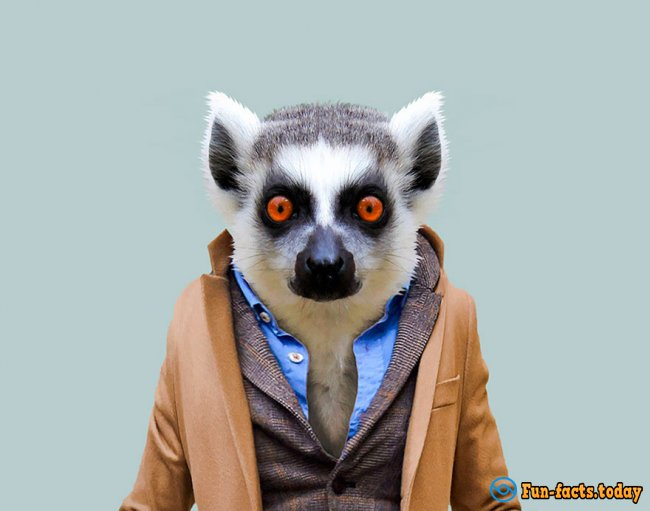 Unusual Photo Project: How Would Look Like Animals If They Wear Clothes And Go To Work
