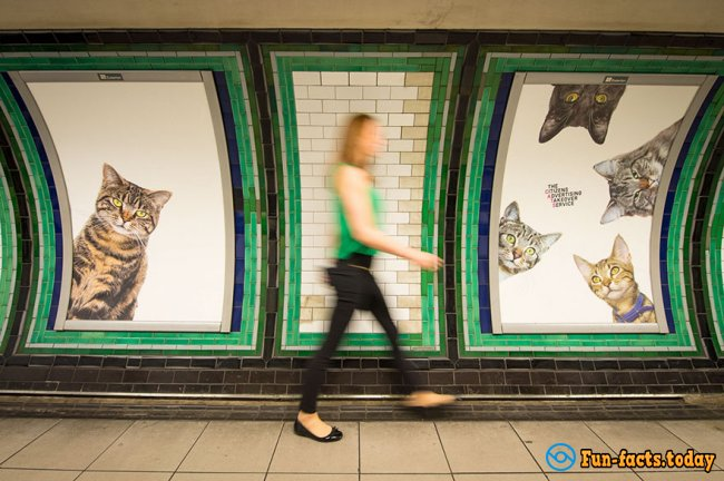 Dozens of Cute Kittens Help To Fight with Advertising in the London Underground