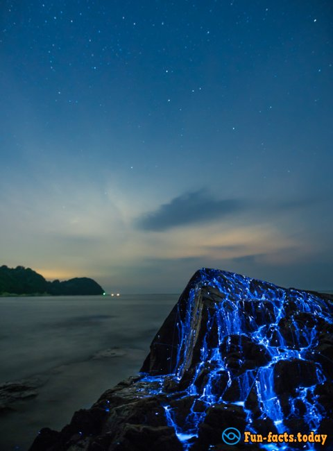 "Incredible Rocks That ""Cry"" With Blue Tears Were Discovered In Japan"