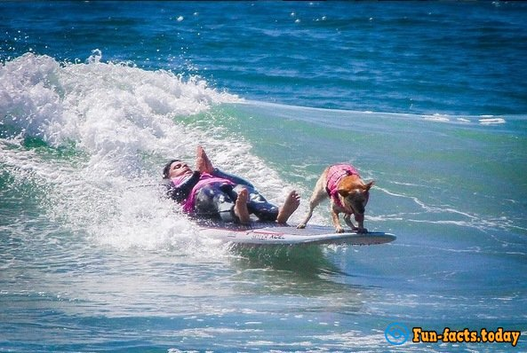 Dogs-Athletes Conquer The Ocean: In America Passed Competition For Animals