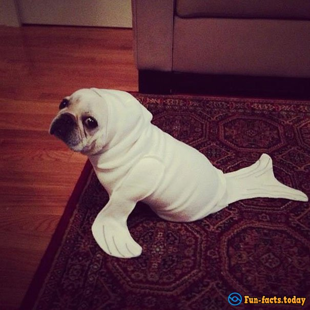 15 Funny Dogs Who Dressed For Halloween Better Than Their Owners