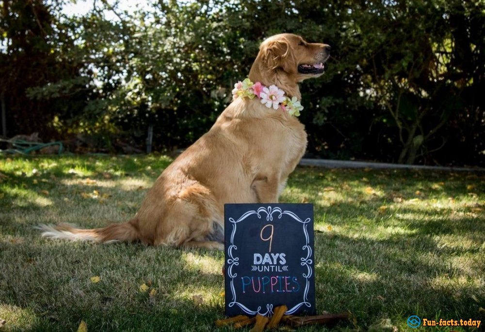 Photo session of Pregnant Dog Conquers Internet