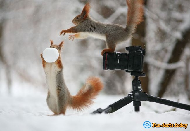 Squirrel Has Found In the Forest Camera and Arranged a Funny Photo Shoot