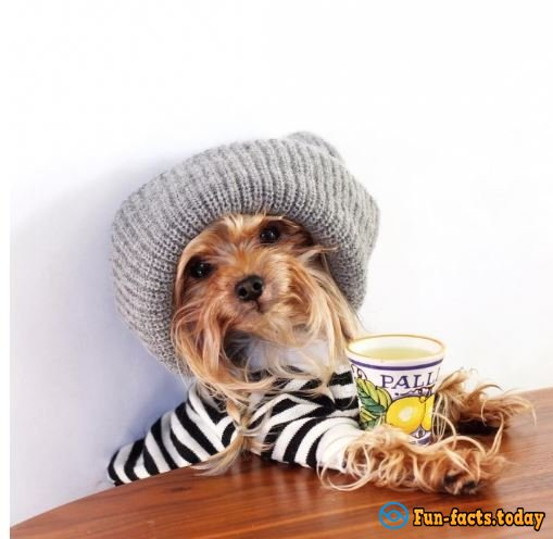 Glamour Queen: Doggie Conquered The Internet With Her Perfect Style