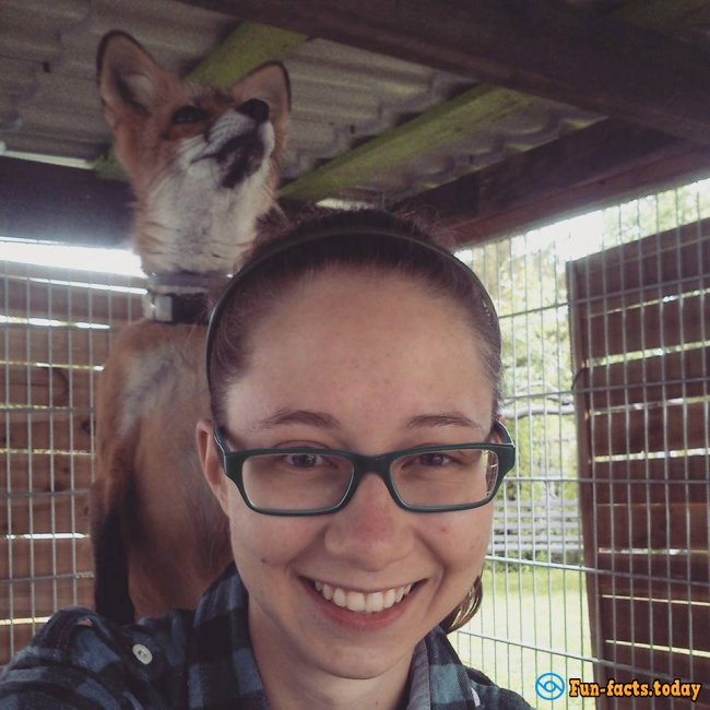 Awesome Friendship of Polish Girl and a Fox