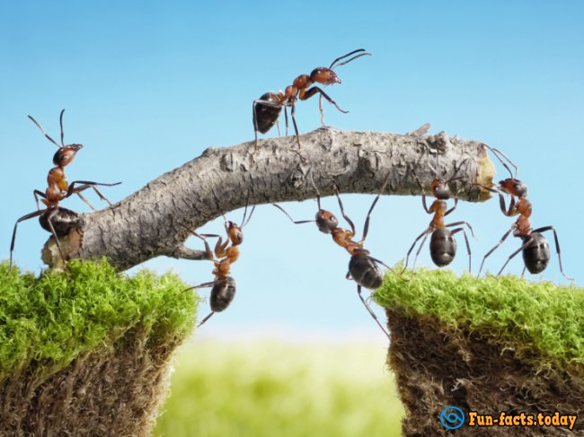 Stunning Facts About Ants