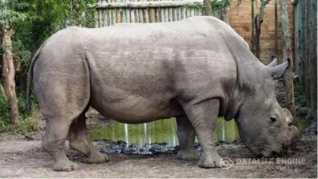 20 Interesting Facts About Rhinoceros