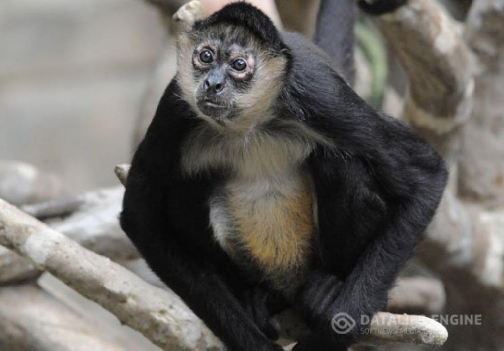 30 Facts about Monkeys